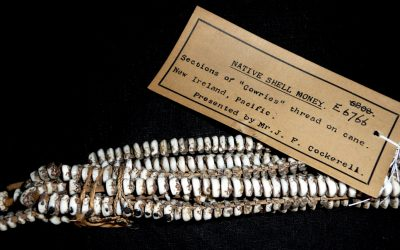 COWRIE SHELLS: AMONG THE WORLD'S OLDEST CURRENCIES